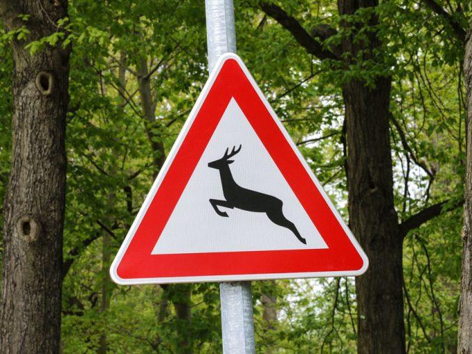 Wildwechsel Schadensregulierung