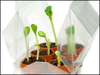 pflanzen vorziehen und eigene ernte g nstig finanzieren. Black Bedroom Furniture Sets. Home Design Ideas